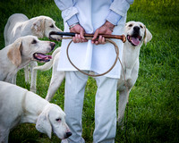 Fine art color photograph of hunting dogs and man holding whip at outdoor dog show