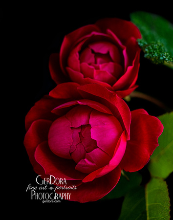 Twin Red Roses
