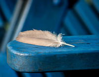 Fine art color photograph of a feather on the arm of a blue Adirondack chair
