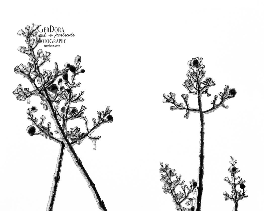 Fine art black and white photograph of tree branches taken at Algonkian Regional Park VA