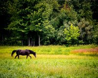 6 June - Horse Country - Purcellville