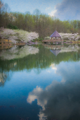"""Fine art color image """"Cherry Blossoms in the Park"""" trees and sky reflecting in the water"""
