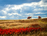 October - Shenandoah Meadow